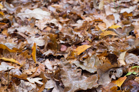 fallen fall leaves in forest
