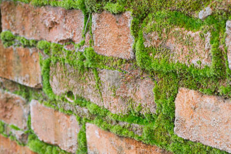 Aged weathered brick wall texture background