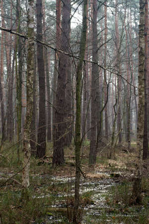 swamp forest in Poland Europe Stock Photo
