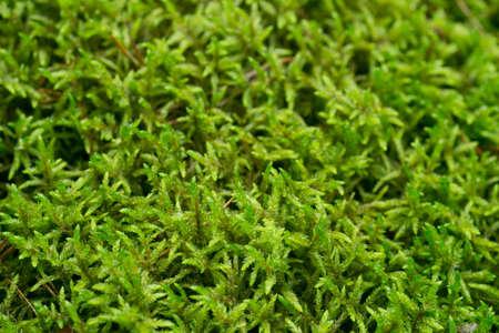moss background texture macro selective focus