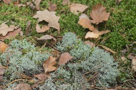 lichen, moss and fallen leaves in forest