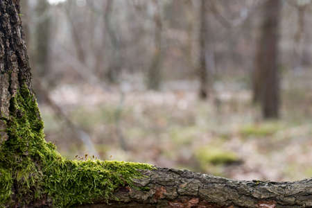 moss on tree branch macro with copy space