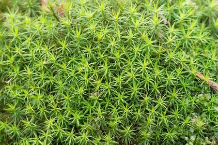 wet green moss macro background