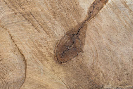 cut poplar tree wooden background texture  macro