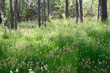 flowering grass in wetland forest on sunny day selective focus Banque d'images - 121975490