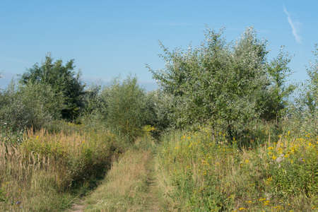 summer landscape with meadow and thicket in Poland on sunny day