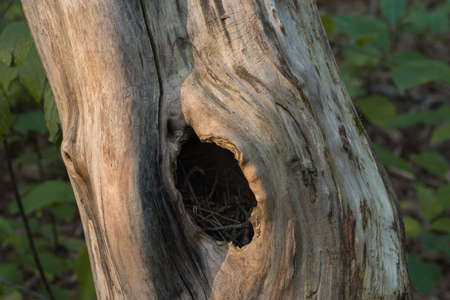 bird nest in hollow closeup Archivio Fotografico
