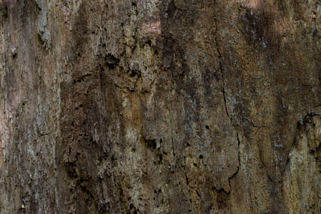old oak tree deamaged by insects closeup selecive focus Archivio Fotografico
