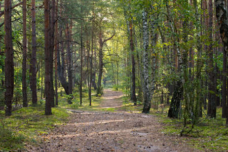 footpath in summer forest on sunny day