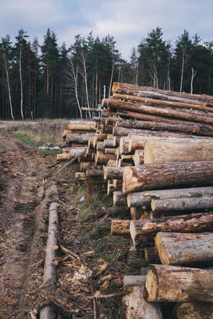Stacked wood pine timber for construction buildings.