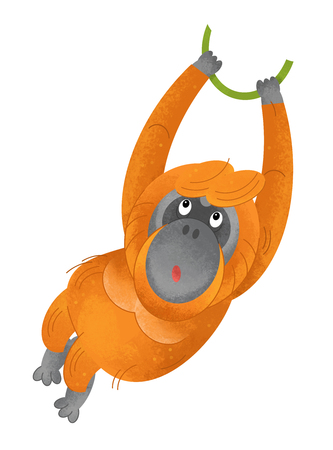 cartoon scene with monkey orangutan on white background - illustration for children