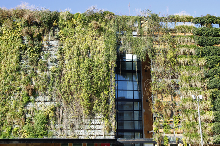 vegetate: Green wall in an ecologic building Stock Photo