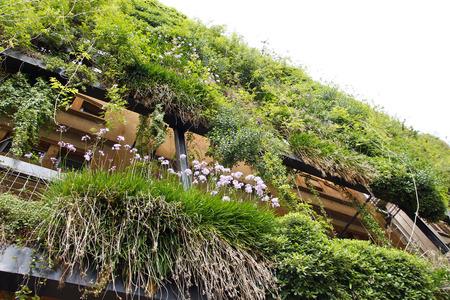Groene muur in een ecologisch bouwen, duurzame architectuur Stockfoto