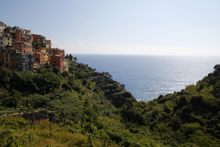 Vineyards next to the sea, Cinque Terre in Italy photo