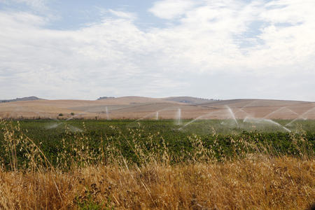 irrigated: Cotton field being irrigated in Spain Stock Photo