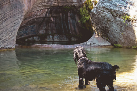 Dog looking to the water in the nature Stock Photo