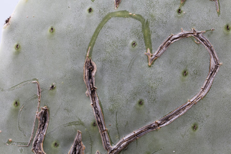 Unfinished heart scar in a cactus Stock Photo