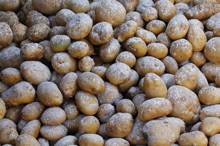 insecticide: Conservation of potatoes, with insecticide against bugs