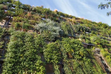 mur vert dans un bâtiment durable
