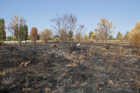 pyromania: Dead environment after a fire in an urban plot