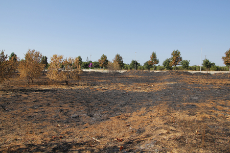 plot: Dead environment after fire in an urban plot Stock Photo