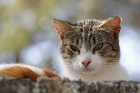 disapprove: Portrait of a cat, in a disapproval looking Stock Photo