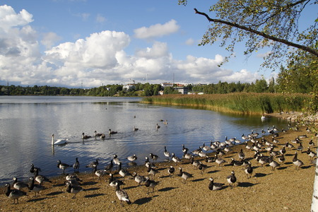 urban wildlife: Lake in an urban park, with wildlife