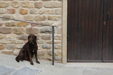Chien brun attendant attaché à l'extérieur, dans la rue