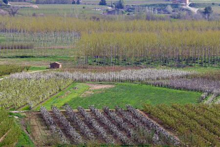 Les arbres fruitiers champs au printemps, l'agriculture coloré