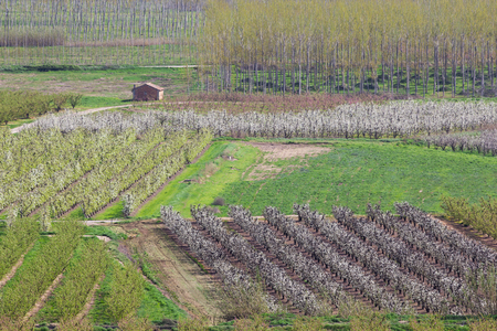 Fruit trees fields at spring, colorful agriculture Banque d'images