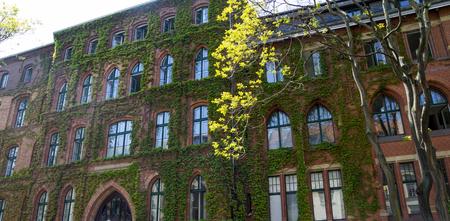 Façade verte dans un grand bâtiment public