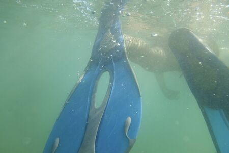 Swimming underwater with blue flippers Éditoriale