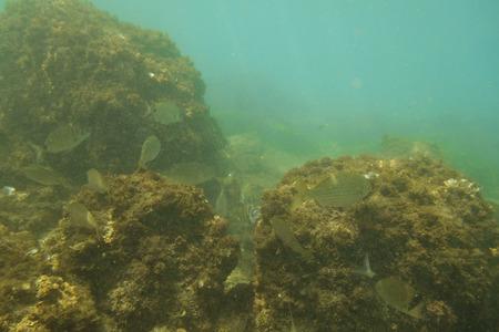 Des rochers sous l'eau avec des poissons, dans la mer