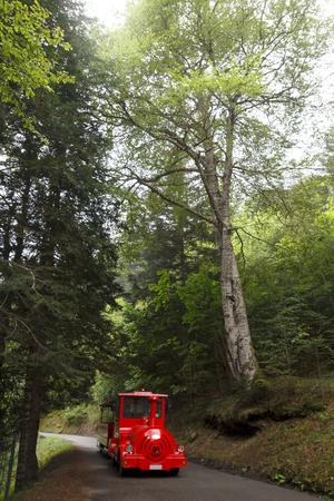 Train touristique rouge dans les montagnes
