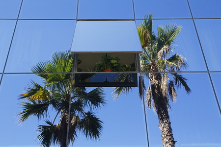 Glass building with open window, plant and reflected palm trees Banque d'images