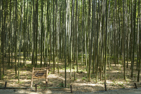 Bamboo forest at Arashiyama district in Kyoto, Japan Banque d'images