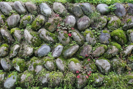 Stone wall with moss background Banque d'images