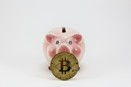 Bitcoin golden coin and piggy box, isolated pig in a white background