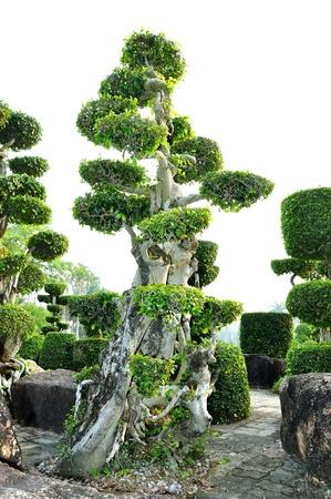 topiary: topiary work plant