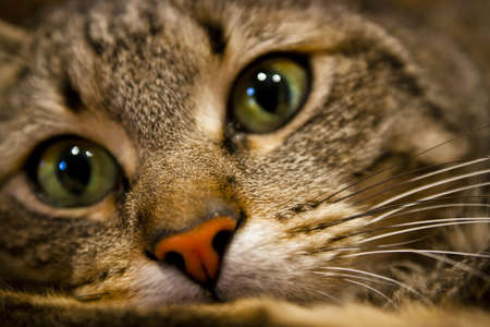 cats playing: detail of the face of a cat Stock Photo