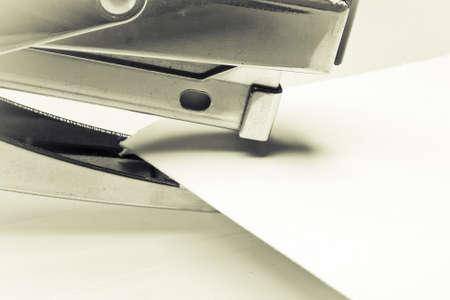 sapling white paper on white background Stock Photo