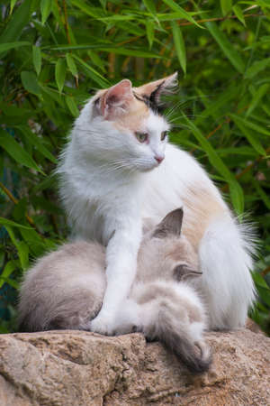 Mother cat with puppies