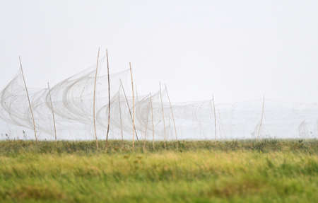 Illegal misses nests in Moeyungyi, Myanmar. Mist nets used to capture wild birds and larger insects for consummation.