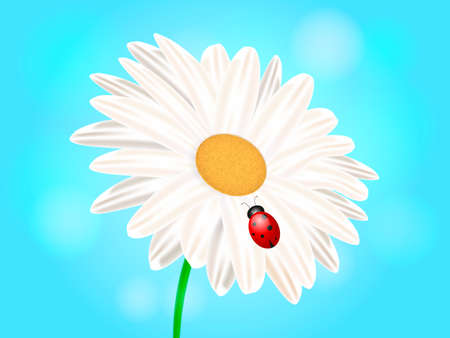 Chamomile with ladybug. Vector illustration