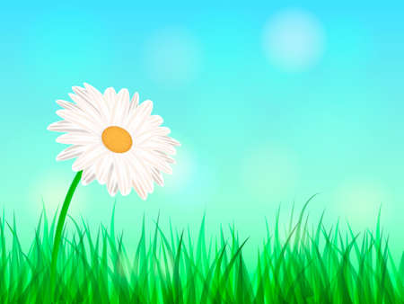 Summer chamomile glade. Space for text. Vector illustration