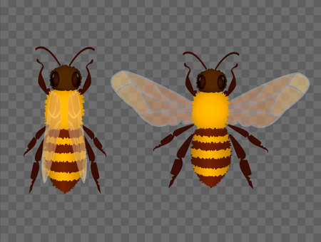 Two bees on transparent background. Vector illustration. Vectores