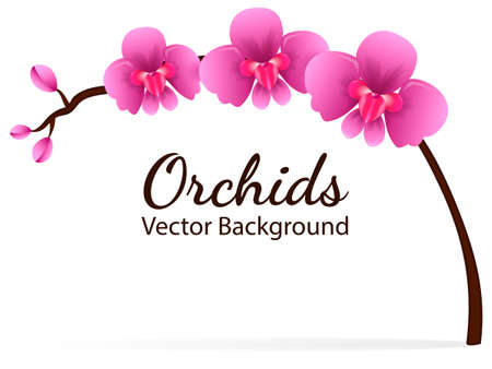 Branch with violet orchid flowers. Vector illustration