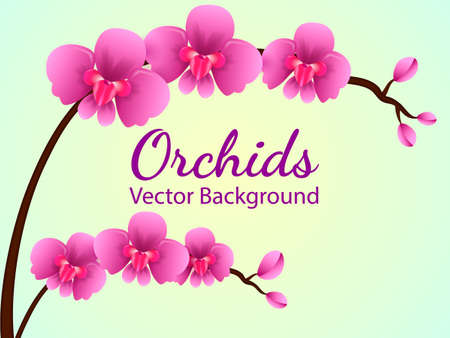 Branch with purple orchid flowers. Vector illustration Vettoriali