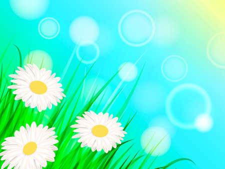Summer chamomile glade. Vector illustration 向量圖像