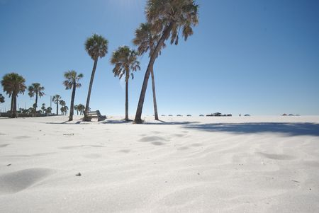palms on clearwater beach photo